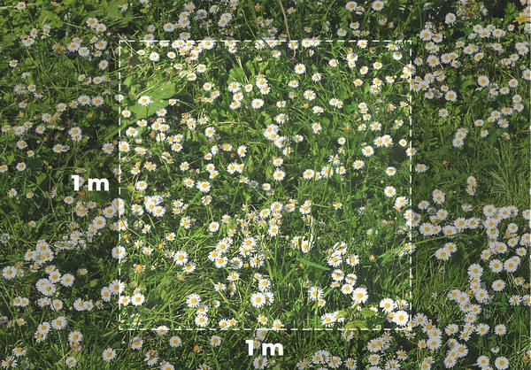 Flower meadow   hvid